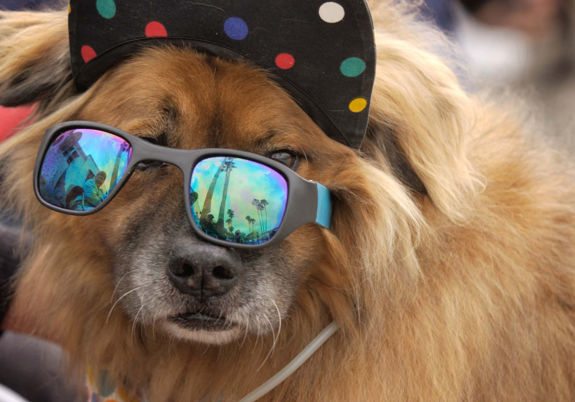 PAR_PhotoReporters_dog-wearing-sunglasses-hat