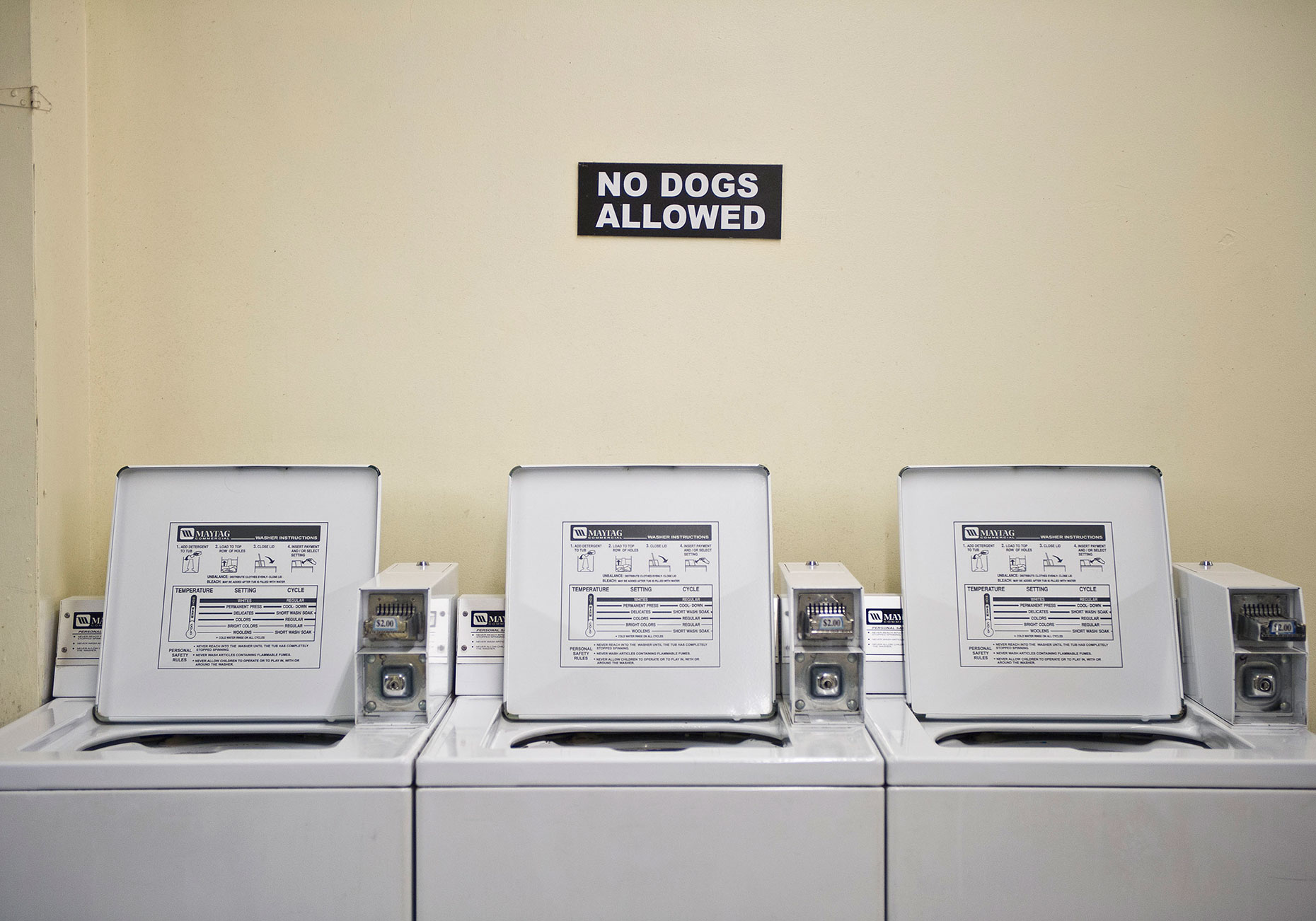 PAR_PhotoReporters_no-dogs-in-laundry-machines